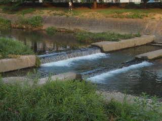 川の水が澄んできた