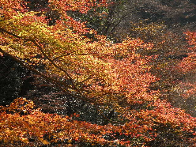神戸岩の紅葉2