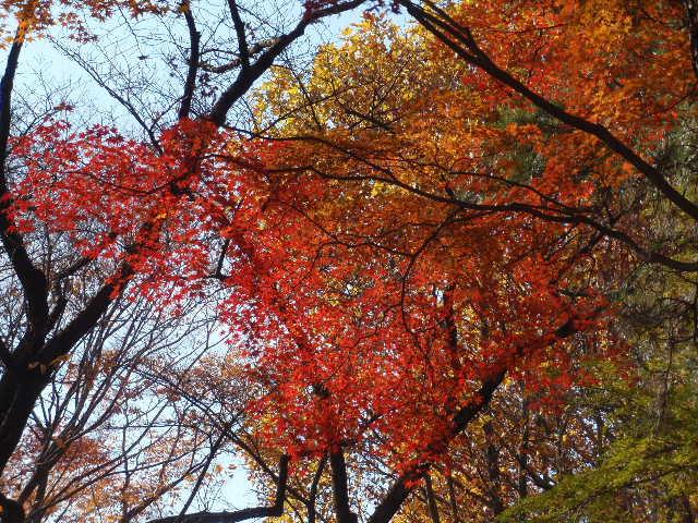富士森の紅葉