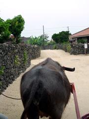 竹富島でのんびり水牛車と星の砂探し☆