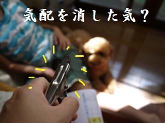 P1020222_convert_20110918192245.jpg