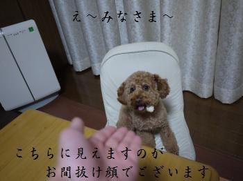 P1030066_convert_20111029093938.jpg
