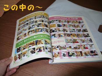 P1030358_convert_20111106125145.jpg