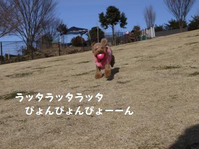 P1040710_convert_20120108185218.jpg
