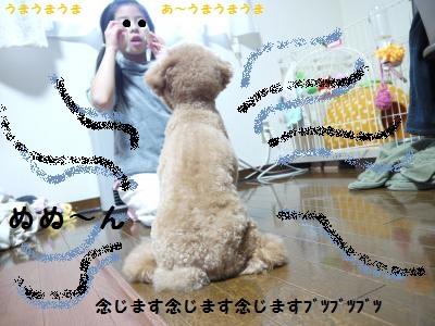 P1040819_convert_20120113175048.jpg