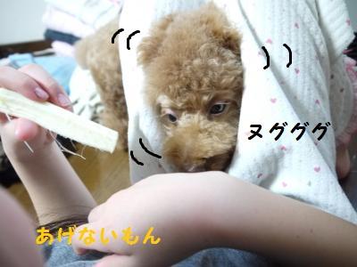 P1040843_convert_20120113180350.jpg