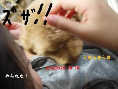 P1040846_convert_20120113180924.jpg