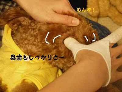 P1040915_convert_20120116191046.jpg