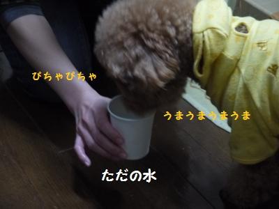 P1040929_convert_20120116192324.jpg