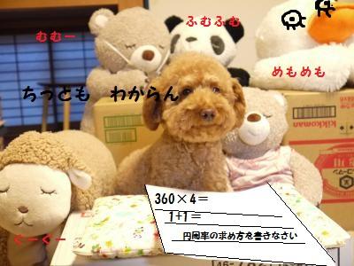 P1040979_convert_20120127130413.jpg