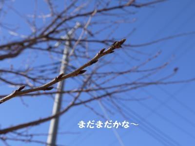 P1050815_convert_20120220223717.jpg