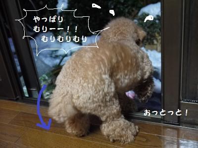 P1060070_convert_20120301095337.jpg
