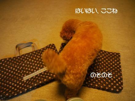 P1070304_convert_20120426191241.jpg