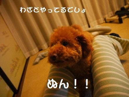 P1080083(1).jpg