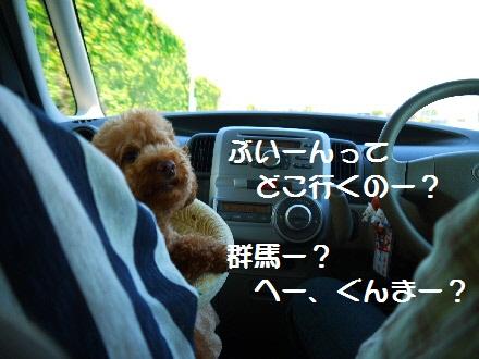 P1080207(1).jpg