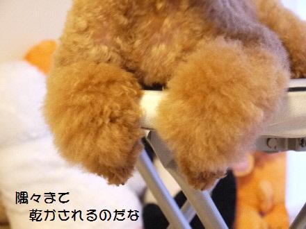 P1090074(1).jpg