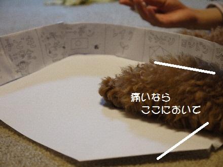 P1090270(1).jpg
