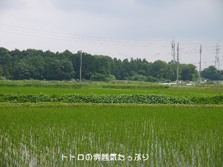 P1090473(1).jpg