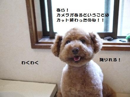 P1090684(1).jpg