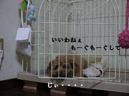 P1090903(1).jpg