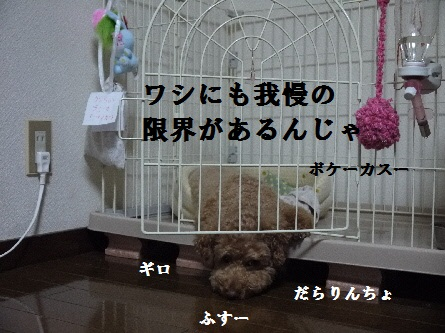 P1090909(1).jpg