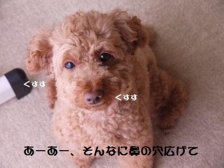 P1090930(1).jpg