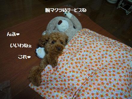 P1100293(1).jpg