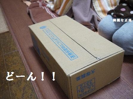 P1150525(1).jpg