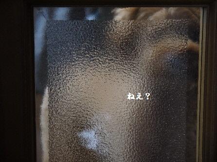 P1160427(1).jpg