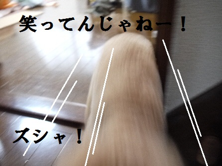P1160439(1).jpg