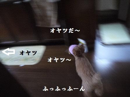 P1160751(1).jpg