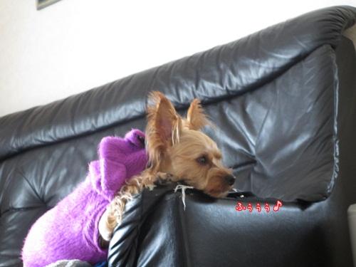 大好きなソファー
