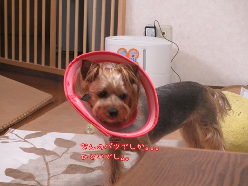 ごめんよ( ノω-、)