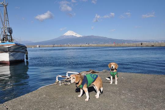 000ななしゅう富士山