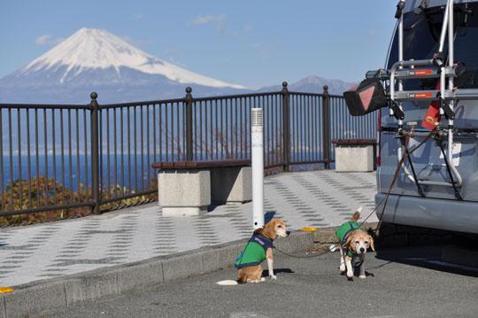 012ワンコと富士山