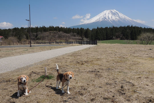 102ワンズと富士山3