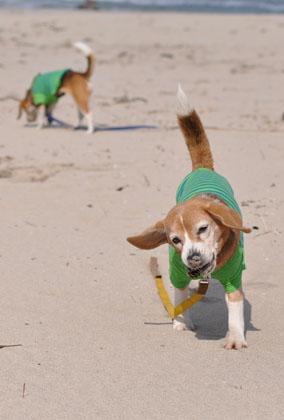 015砂浜遊び