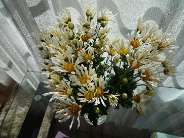 20111104kiku1.jpg