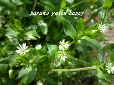 20120415hakobera.jpg