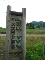 20120513suzuran3.jpg