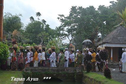 201209tamanayun5.jpg