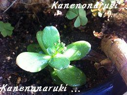 20121218narikonsou.jpg