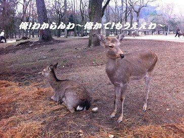20121223shika1.jpg
