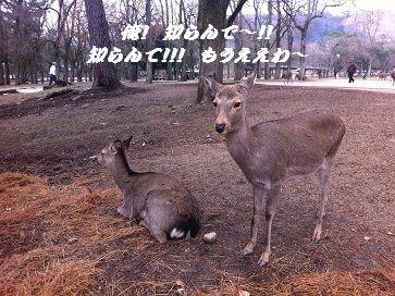 20121223shika3.jpg