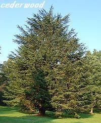cederwood.jpg
