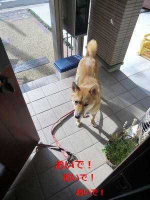 011_20111108100439.jpg