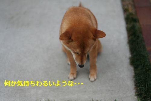 028_20120527221607.jpg