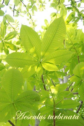 green14-3_20110603225124.jpg
