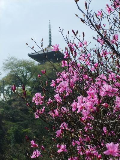 三渓園 花