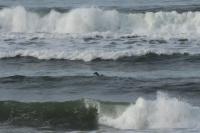 surfing020213